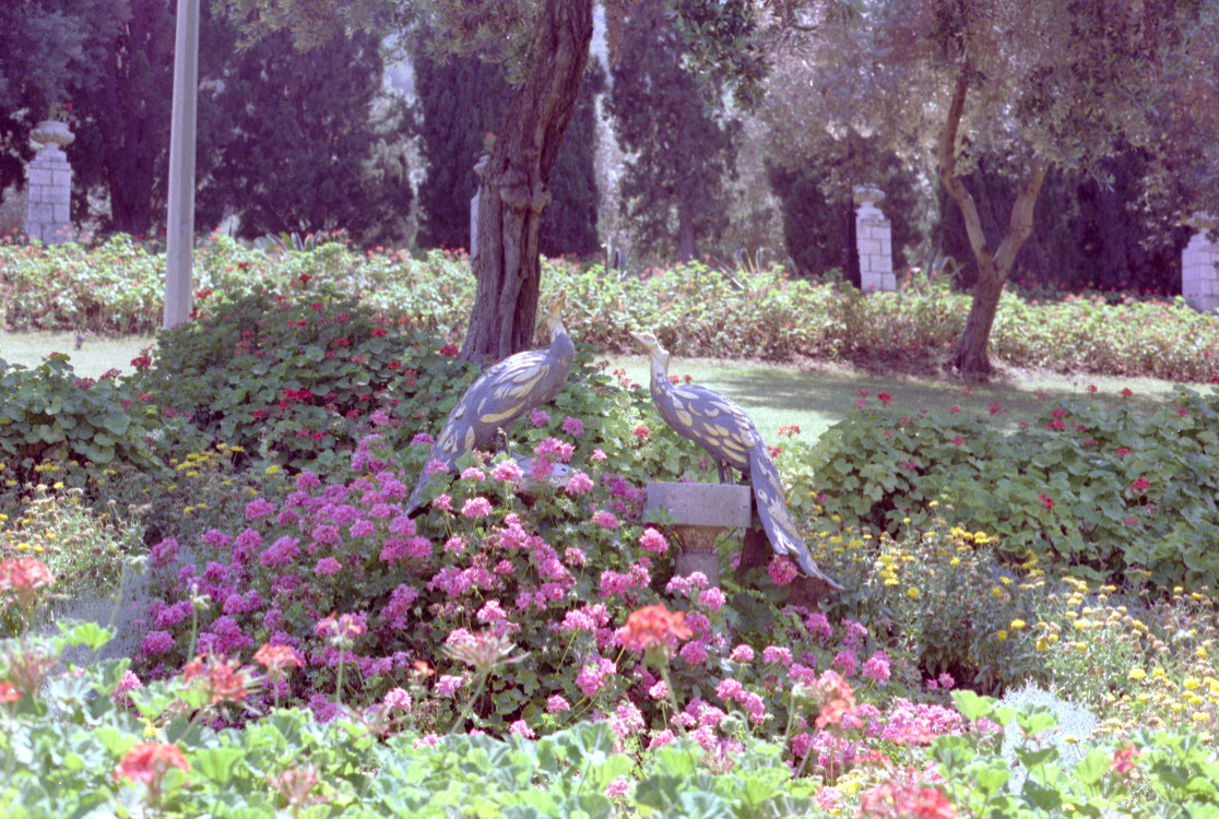 Ornamental peacocks near the Shrine of the Báb in Haifa, Israel