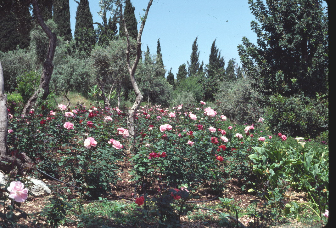 A view of the nursery below the old pilgrim house in Haifa, Israel