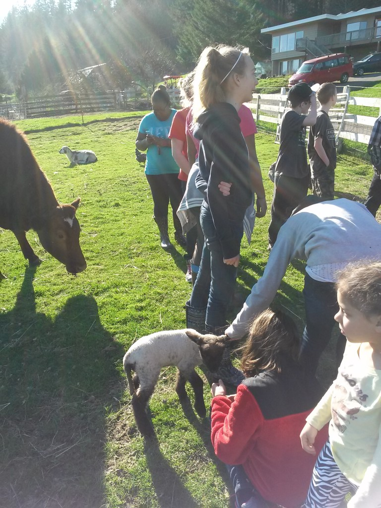 Junior Yout Farm visit