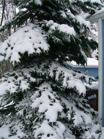 Snow in Tacoma on December 21st