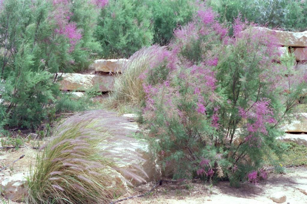 Sdeh Boker, in the Negev Desert, Israel
